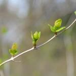 Frühlingsstimmung bei Eins A