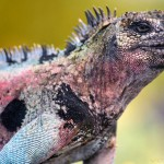 Das Foto zeigt eine farbenfrohe Echse. Auch Farben sprechen das Reptiliengehirn an. Das sollte man in der Unternehmenskommunikation nicht vergessen.